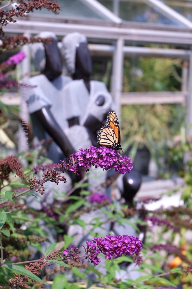 Every Summer has a Story: 2018 Edition - Edwards Gardens | www.sproutingbalance.com | #Edwards #Gardens #ZimScupt #Butterfly