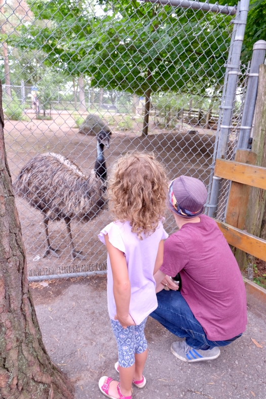 Every Summer has a Story: 2018 Ottawa - Riverview Park and Zoo | www.sproutingbalance.com | #Peterborough #zoo #summer #trip